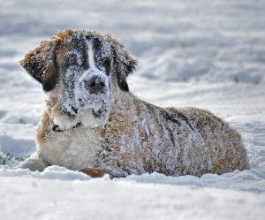 health issues in dogs due to snow