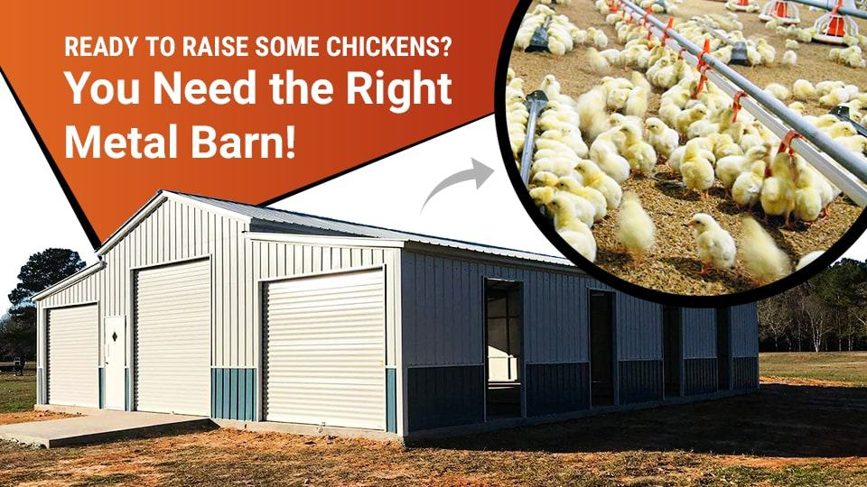 Ready to Raise Some Chickens? You Need the Right Metal Barn!